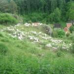 Rasenmäher auf dem Hühnerberg